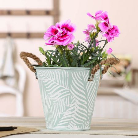 Small Mint Fern Summer Planter with Rope Handles