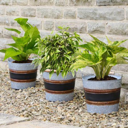 Set of 3 Black Band Bucket Planters