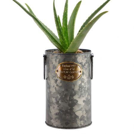 Indoor Urban Planter