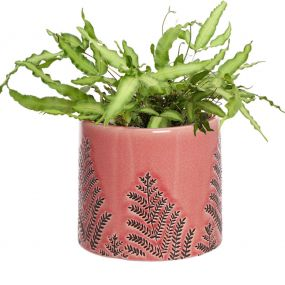 Blush Pink Fern Ceramic Planter