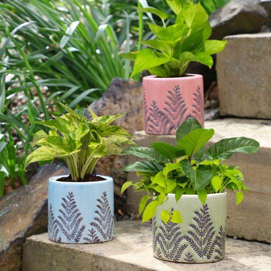 Botanical Fern Ceramic Plant Pots