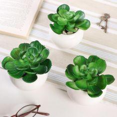 Set of 3 Everlasting Windowsill Succulent Pots