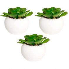 Set of 3 Everlasting Windowsill Succulent Pots