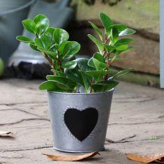Vintage Zinc Love Heart Flower Planter