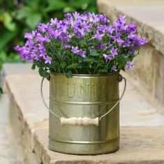 Aged Zinc Country Style Planter