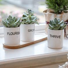 Indoor White Ceramic Succulent Planters