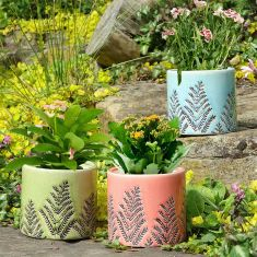 Botanical Fern Plant Pots