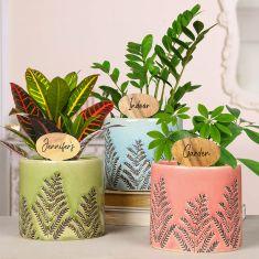 Set of 3 Personalised Ceramic Planters Gift Set