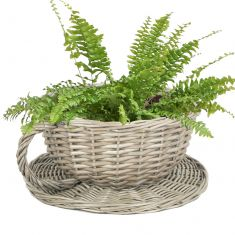 Novelty Tea Cup and Saucer Shaped Wicker Planter