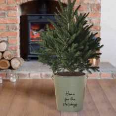 Personalised Sage Christmas Tree Bucket Planter
