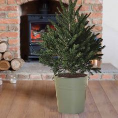 Sage Christmas Tree Bucket Planter