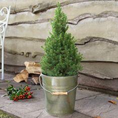 Large Vintage Christmas Tree Bucket Planter