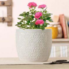 Stone Grey Botanical Embossed Plant Pot