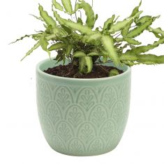 Peppermint Botanical Embossed Plant Pot