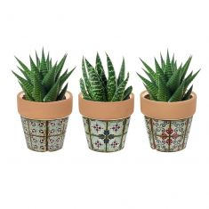 Set of 3 Miniature Succulent Pots