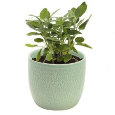 Peppermint Green Petite Herb Pot