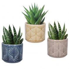 Set of 3 Leaf Cacti Planters