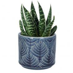 Blue Leaf Cacti Planter
