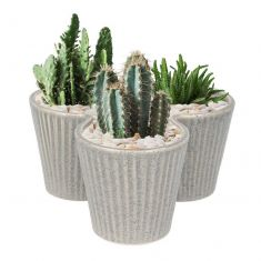 Triple Grey Rippled Cacti Planter