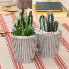 Alpine Style Triple Grey Rippled Succulent Cacti Planter