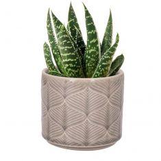 Grey Leaf Cacti Planter