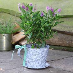 Scalloped Metal Tea Cup Planter