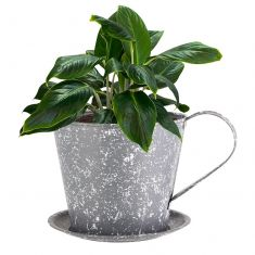 Grey Metal Teacup Planter