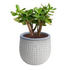 Ceramic Bobble Flower Planter