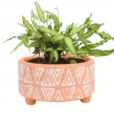 Terracotta Footed Bucket Flower Planter