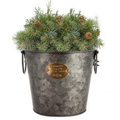 Aged Zinc English Country Planter Bucket
