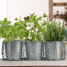 Sage Green and Vintage Zinc Windowsill Herb Planters
