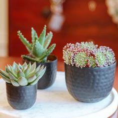 Set of 3 Black and Copper Succulent  Plant Pots