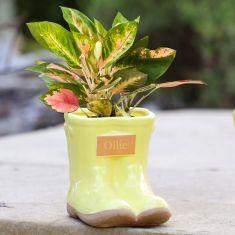 Personalised Small Summer Yellow Wellington Planter