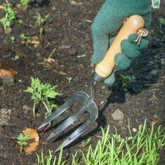 Pinewood Handle Garden Fork