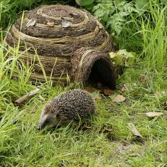 Natural Rattan Hedgehog Igloo Shelter