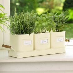 Set of 3 Country Cream Kitchen Herb Pots on Tray