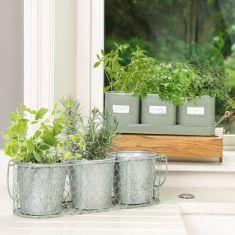 Sage Green Windowsill Herb Planters