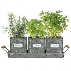 Set of 3 Zinc Grey Metal Herb Pots on Tray