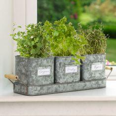 Set of 3 Vintage Zinc Grey Metal Herb Pots on Tray