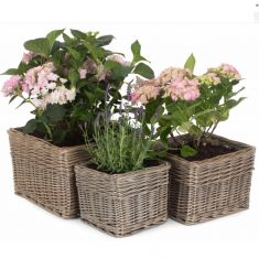 Set of 3 Natural Willow Wicker Planters